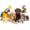 Все для домашних животных