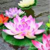 Искусственные цветы - ЛОТОС